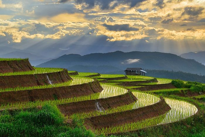 Step Farming
